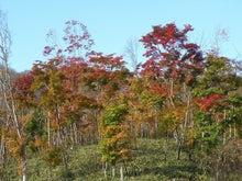 ほべつの森のこばなし帳-モミジ紅葉