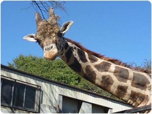 ひばらさんの栃木探訪-ひばらさんの栃木探訪 宇都宮動物園