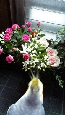 オカメインコのももちゃんと花教室と旅日記-101022_082152.jpg