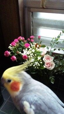 オカメインコのももちゃんと花教室と旅日記-101022_082238.jpg