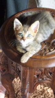 猫にSweets-101023_0906~010001.jpg