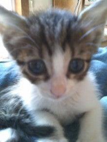 猫にSweets-100928_1457~01.jpg