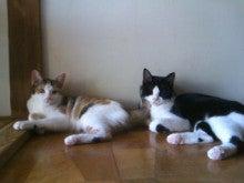 猫にSweets-101002_1116~02.jpg