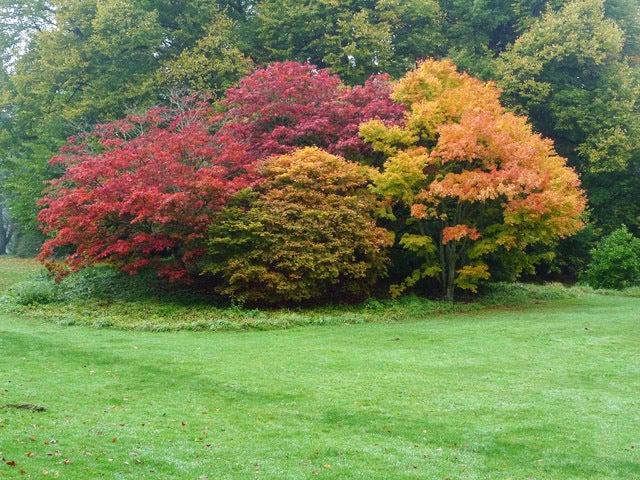 美しい国、英国のアンティーク&カントリーライフ-Batsford Arboretum