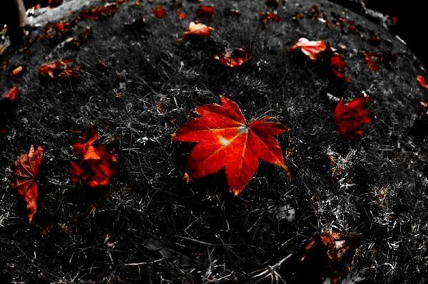 北海道の野生動植物写真-秋