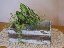 カントリー家具&雑貨 Slow Life Garden スタッフ日記