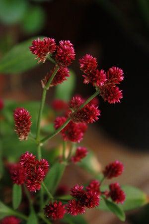 Veranda Photo Journal-flower