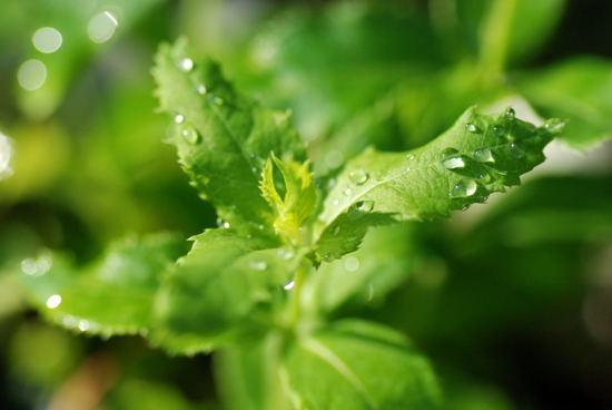 志度・路・戻ろ-季節の植物