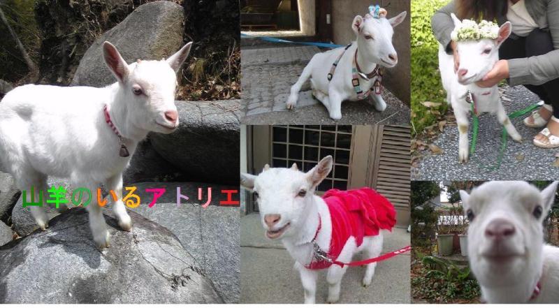 山羊のいるアトリエ ~ミニヤギバニラ王子とまーかの恋物語~