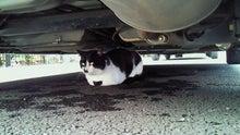 臣の野良猫仕事日記-201010261519000.jpg