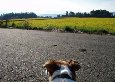 ゆる楽しいくらしづくり-マーくん、だだ広~い農道で。