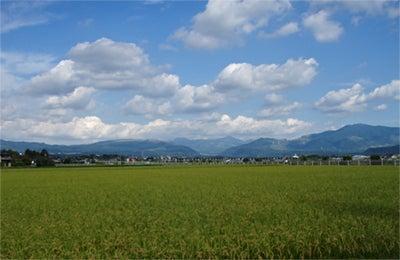 ゆる楽しいくらしづくり-熊本到着!金色の稲と阿蘇の山並み。