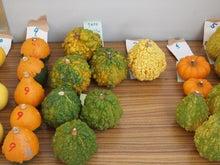 $パンプキンミッション 宇宙かぼちゃ栽培ブログ-収穫2