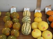 $パンプキンミッション 宇宙かぼちゃ栽培ブログ-収穫3