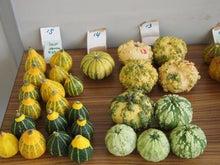$パンプキンミッション 宇宙かぼちゃ栽培ブログ-収穫4
