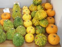 パンプキンミッション 宇宙かぼちゃ栽培ブログ-収穫1