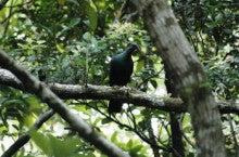 小笠原エコツアー 父島エコツアー         小笠原の旅情報と小笠原の自然を紹介します-ハトY18