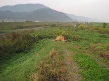 $歩き人ふみの徒歩世界旅行 日本・台湾編-若狭町北川堤防