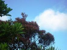 小笠原エコツアー 父島エコツアー         小笠原の旅情報と小笠原の自然を紹介します-傘山より
