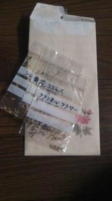ベランダのちょこっとガーデニング☆-101025_1928~01.jpg