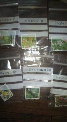 $ベランダのちょこっとガーデニング☆-101031_1441~01.jpg