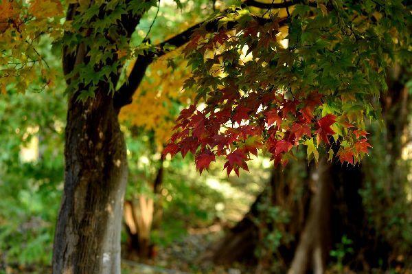 北海道の野生動植物写真-百合が原公園