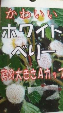 $ベランダのちょこっとガーデニング☆-101102_0824~03.jpg
