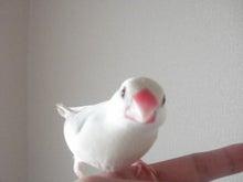 $小鳥な毎日2