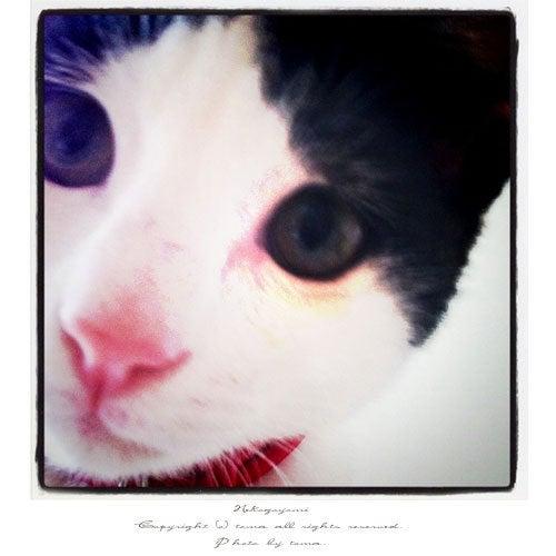 猫暦 -休日。2