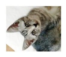 【簡単!】新しい在宅ワークのカタチ☆-ネコちゃん