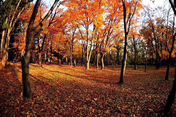 北海道の野生動植物写真-円山公園