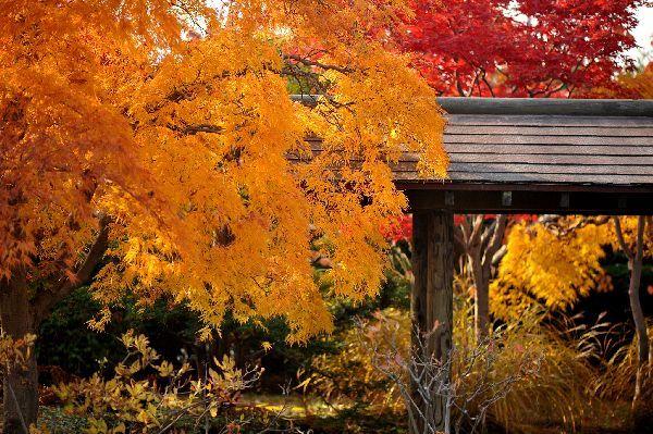 北海道の野生動植物写真-平岡樹芸センター