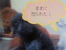 ぽんのブログ