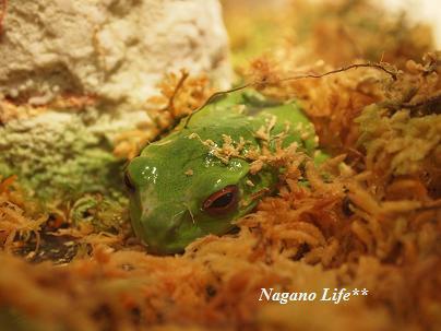 Nagano Life**-寒がりかえる