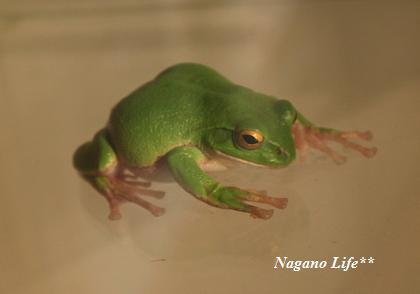 Nagano Life**-かえる