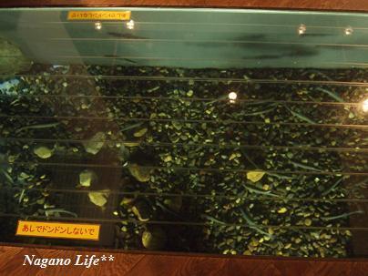 Nagano Life**-足元に魚