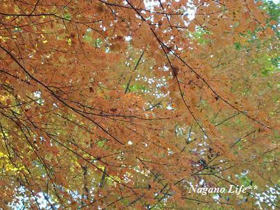 Nagano Life**-見上げれば