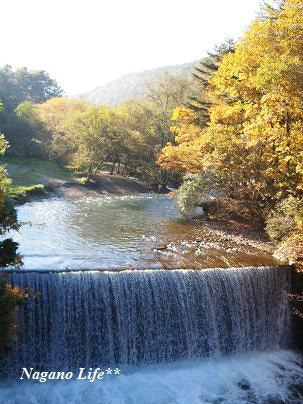 Nagano Life**-紅葉