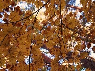 Nagano Life**-色づき