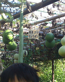 ふくたのログブー-府立植物園⑨