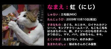 虹色ブログ