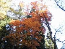 気になる事…独り言…ブログ-紅葉と空