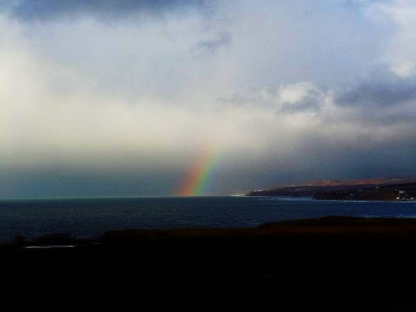 北海道の野生動植物写真-虹