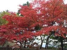 ぶぶの音楽ブログ-紅葉