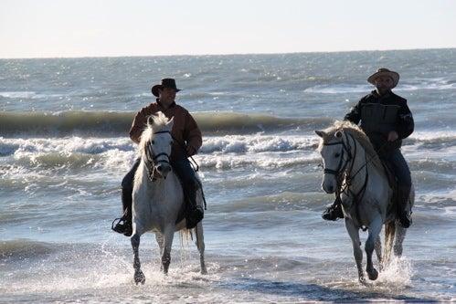 プロヴァンス発 南フランス暮らし365日-馬と海