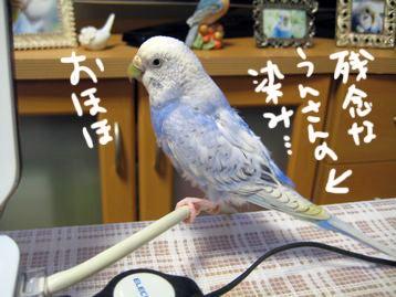 ぴーちゃん!ぷぷぷ