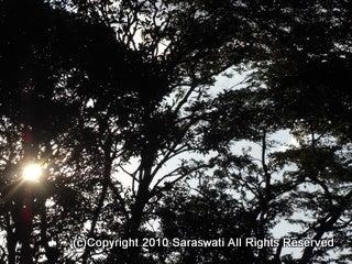saraswati -中目黒-