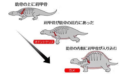 川崎悟司 オフィシャルブログ 古世界の住人 Powered by Ameba-カメへの進化