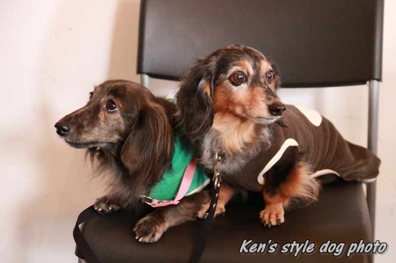 Ken's style dog photo