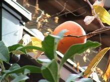 おまけ道@琵琶湖畔で実家生活♪ポテチンっ♪-1117